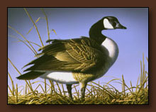 Bob Hautman Duck Stamp