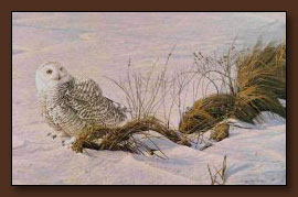 Robert Bateman Afternoon Glow Art Print
